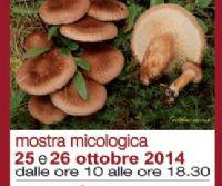 Locandina: I funghi e il bosco. Visite guidate nel modo dei funghi