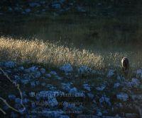 Locandina: Tempo da lupi