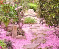 Locandina: Hanami all'Orto Botanico