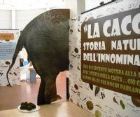 Locandina: La cacca: storia naturale dell'innominabile