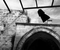 Locandina: La Memoria degli Alberi