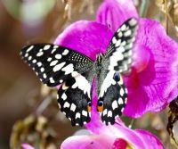 Locandina: La Casa delle Farfalle