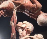 Locandina: Roma Real Bodies
