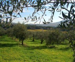 Locandina: Corso teorico - pratico organizzato dal Parco di Veio e il Parco della Valle del Treja