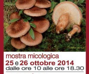 Locandina evento: I funghi e il bosco. Visite guidate nel modo dei funghi