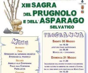 Locandina evento: XIII Sagra del prugnolo e dell'asparago selvatico
