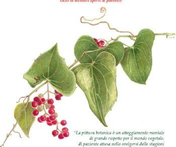 Altri eventi - Storia della pittura botanica