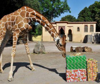 Bambini - Natale al Bioparco