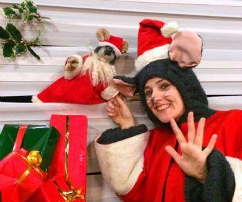 Spettacoli - Il vestito verde di Babbo Natale