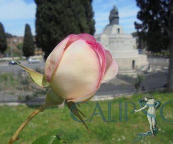 Visite guidate - Il Roseto: una gemma profumata a Roma