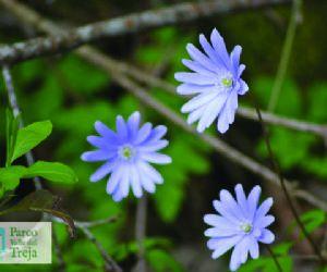 Visite guidate - I fiori nella valle