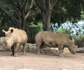 Bambini - Week end con i due rinoceronti bianchi Thomas e Kibo