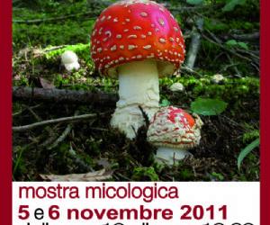 I funghi nel bosco
