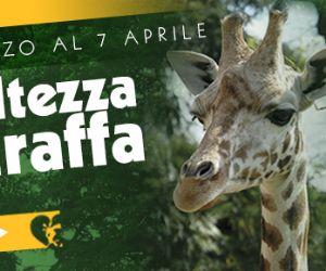 Altri eventi: Domenica 24 e 31 marzo e domenica 7 aprile il Bioparco di Roma dedica tre giornate speciali al più alto mammifero terrestre, che da sempre incanta grandi e piccini