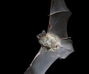 I pipistrelli al Bioparco
