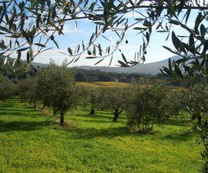 Corsi e seminari - Corso teorico - pratico organizzato dal Parco di Veio e il Parco della Valle del Treja