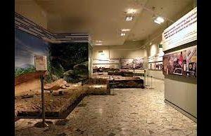 Visite guidate - Febbraio al Museo Pigorini