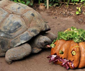 Bambini e famiglie: Halloween al Bioparco