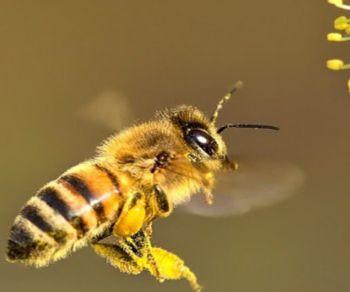 Bambini e famiglie - Le api amiche