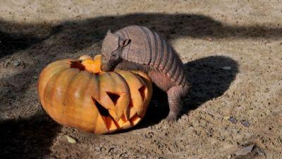 Bambini e famiglie - Speciale Halloween al Bioparco