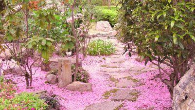 Attività - Hanami all'Orto Botanico