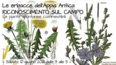 Bambini e famiglie - Acquerelli nell'orto ed erbacce dell'Appia antica