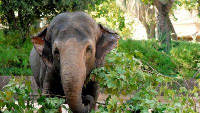 Bambini e famiglie - Al Bioparco tornano i pasti degli animali