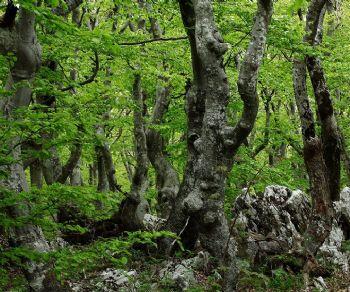 Altri eventi - Alberi sapienti antiche foreste. Come guardare ascoltare e avere cura del bosco