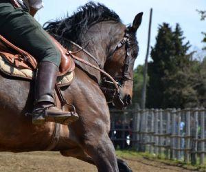 Fiere: Cavalli a Roma