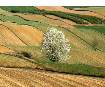 Altri eventi - Criminalità ambientale e agroalimentare