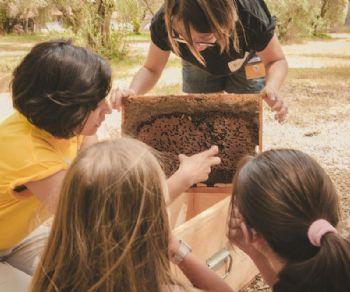 Una serie di eventi dedicati al mondo delle api e della conservazione della natura