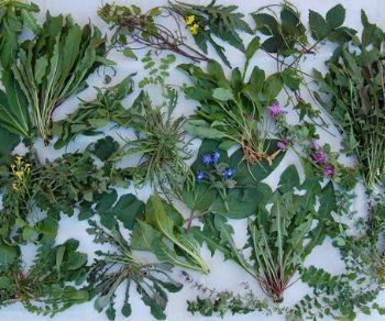 Locandina: Le piante e l'uomo