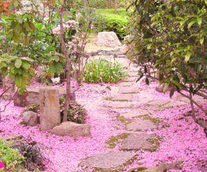 Rassegne - Hanami all'Orto Botanico