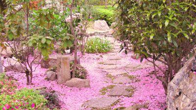 Visite guidate - Orto Botanico e Casa delle Farfalle