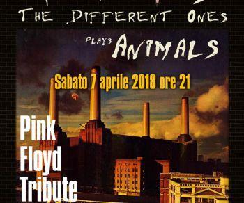 """I Pigs tornano live con l'esecuzione integrale di """"Animals"""""""