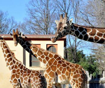 Bambini - Il Bioparco di Roma riapre al pubblico