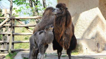 Bambini e famiglie - I cuccioli del Bioparco