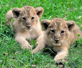 Bambini - Bimbi gratis al Bioparco
