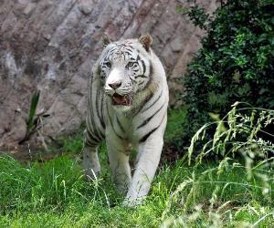 Bambini e famiglie: Una domenica con le tigri