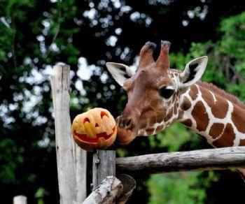 Bambini - Halloween al Bioparco