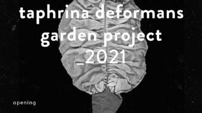 Gallerie - Taphrina deformans garden project_2021