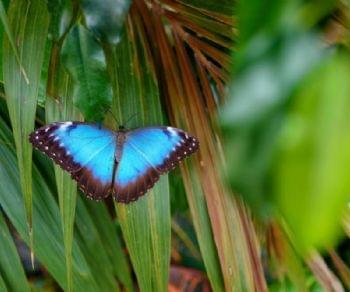 Altri eventi - La Casa delle Farfalle torna a Roma