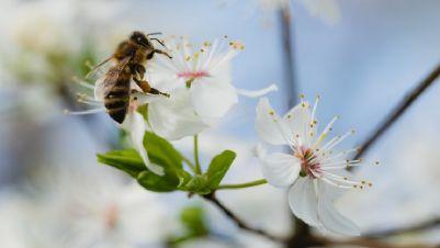 Mostre - La via delle api