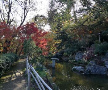 Visite guidate: Luci e colori d'Autunno all'Orto Botanico di Roma