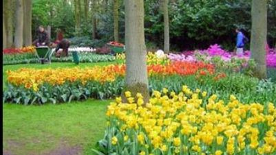 Visite guidate - Luci e colori di Primavera all'Orto Botanico di Roma