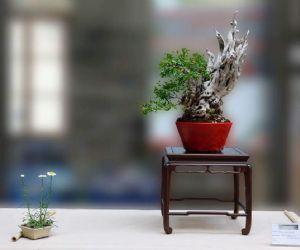 Manifestazione dedicata al Giardino Giapponese e all'Arte Bonsai