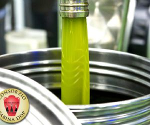 Produzione di olio extra vergine 2015 di altissima qualità
