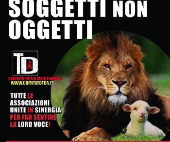 Festival - Soggetti Non Oggetti