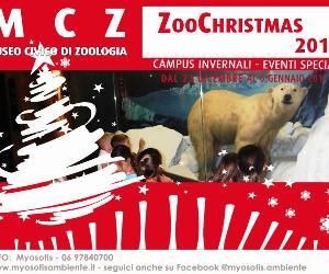 Capodanno: Zoochristmas 2016