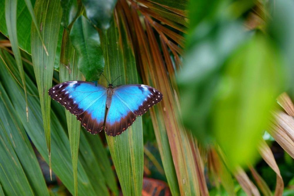sociale farfalla dating tasse di incontri Linx
